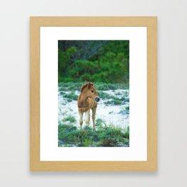 Assateague Foal Framed Art Print