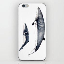 Minke whale with baby whale iPhone Skin