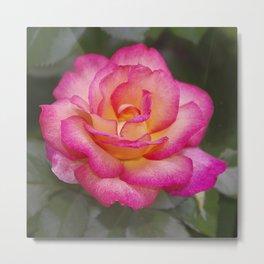 Rainbow Sorbet Rose Metal Print