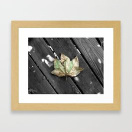Single leaf in a whole world of trees Framed Art Print