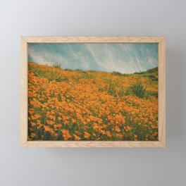 California Poppies 016 Framed Mini Art Print