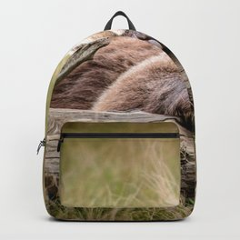Big Beautiful Grizzly Bear Relaxing In Green Meadow Close Up Ultra HD Backpack
