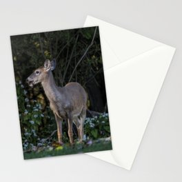 Mule Deer in the Brush Stationery Cards