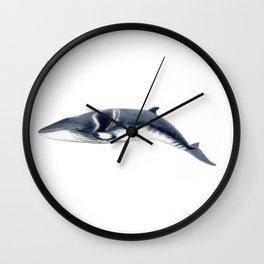 Baby Minke whale Wall Clock