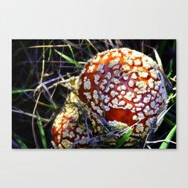 The Mushroom Experience Canvas Print