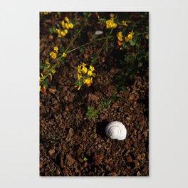 Baja: Seashell in the Mountains Canvas Print