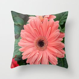 pink gerbera daisy in the vase Throw Pillow