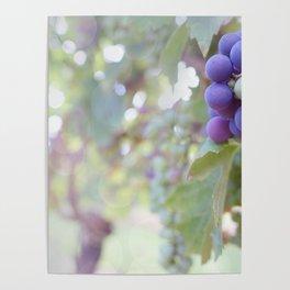 Sunlight on the Grape Vines Poster