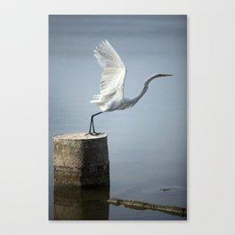 White Heron´s Fly Canvas Print