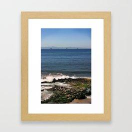 Seals Framed Art Print
