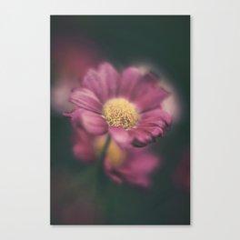 Daisy' Canvas Print