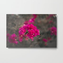 Bougie with the Bougainvillea Metal Print