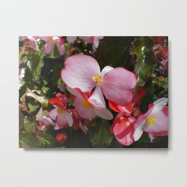Begonia in the Rose Garden Metal Print