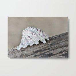 Ocean Shell  Metal Print