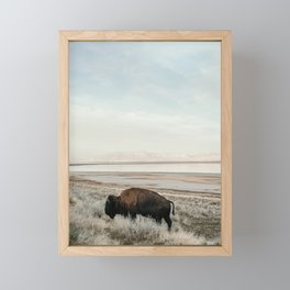 Bison of Antelope ISland Framed Mini Art Print