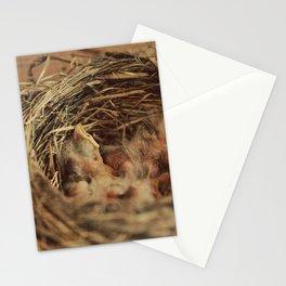Baby Robbin Stationery Cards