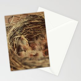 Baby Robbin Stationery Cards