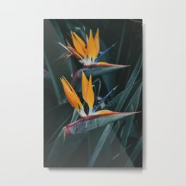 Tropical Paradise Flowers. Strelitzia Reginae Plant. Madeira Island, Portugal. Fine Art Travel Print Metal Print
