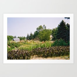 Flower Farm 2 Art Print