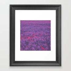 purple poppy field I Framed Art Print
