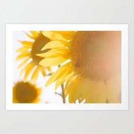 Sunflowers and Sunshine Art Print