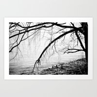 River Trees Art Print