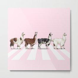 Llama The Abbey Road Pink Metal Print