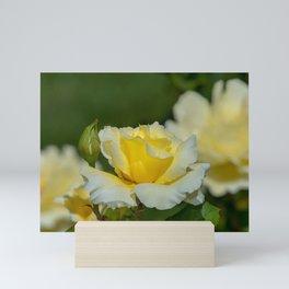 White Licorice Rose Mini Art Print