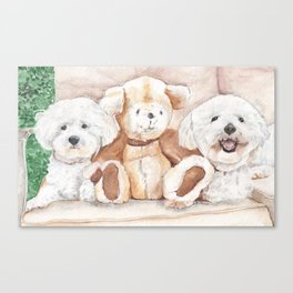 Two Bichons and A Friend Canvas Print