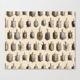 Vintage Turtles Pattern Canvas Print