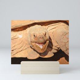 Geochelone sulcata Mini Art Print