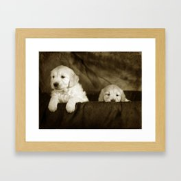 Labrador puppies Framed Art Print