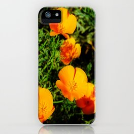 Golden Poppy iPhone Case