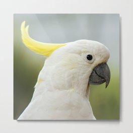 Yellow Crested Cockatoo Metal Print