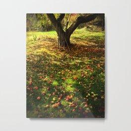 Apple Tree Harvest - 2013 Metal Print