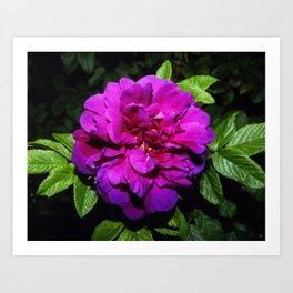 Colour of blooming Art Print