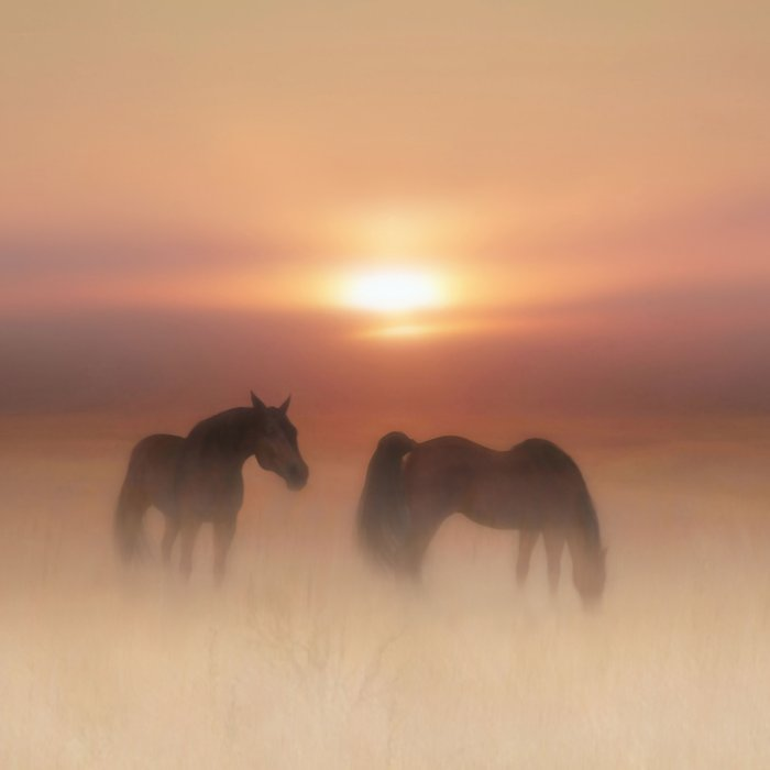 Horses in a misty dawn Comforters