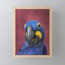 Cheeky Blue Hyacinth Macaw Framed Mini Art Print