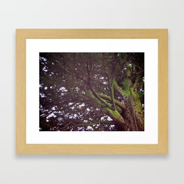 Roots and Wings Framed Art Print