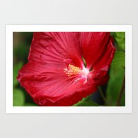 hibiscus Art Prints featuring Hibiscus  by LoRo  Art & Pictures