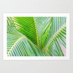 Palms II Art Print