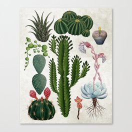 Cacti Family Canvas Print