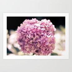 The beautiful hydrangea Art Print