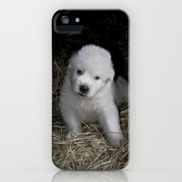Great Pyrenees Puppy iPhone Case