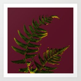 Fern on burgundy Art Print