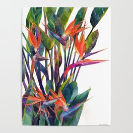 The bird of paradise Poster