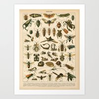 insects Art Prints featuring Insects by Connie Goldman