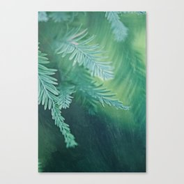 Feathery Canvas Print
