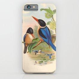 Halcyon Atricapillus Kingfisher Vintage Birds iPhone Case