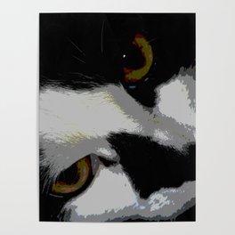 Black white cat Poster